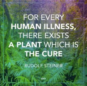 plant cure for illness Steiner